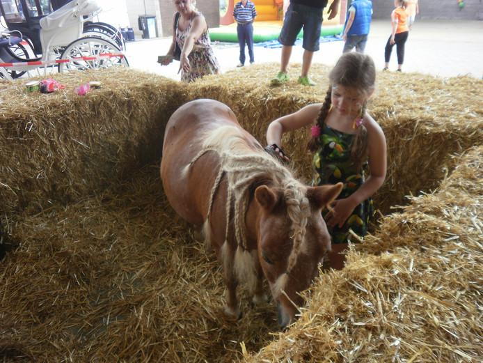 Pony borstelen op De Burgthoeve.