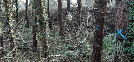 Wat doen die blauwe kruizen op ruim 120 bomen langs de weg in Harderwijk?