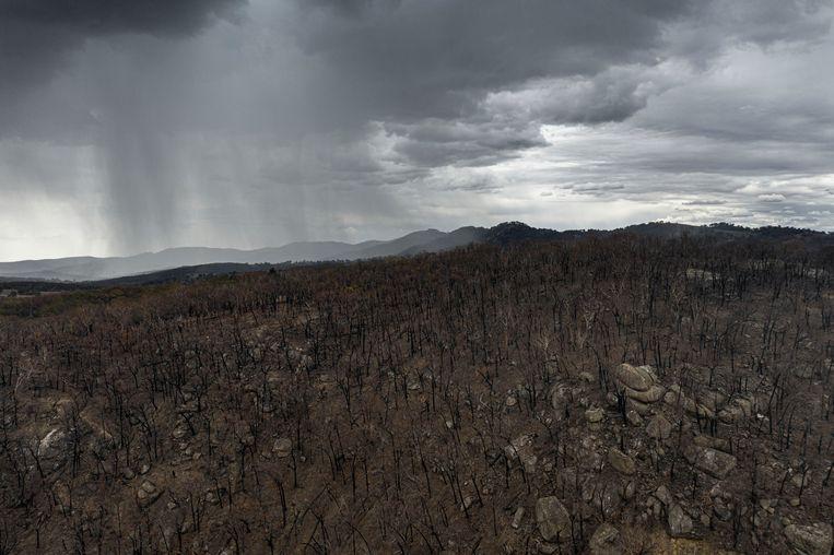 Regenbuien boven een uitgebrand gebied in de buurt van Tamworth in New South Wales in Australië Beeld Getty Images