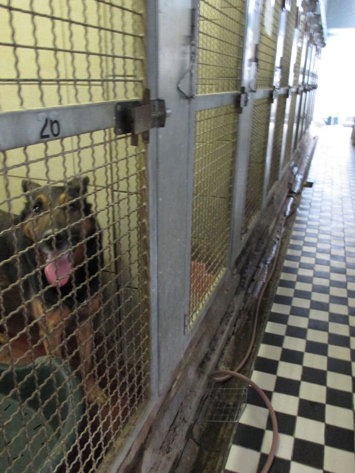 De kennels in de gang, waar vroeger de honden zaten, blijven voorlopig  behouden