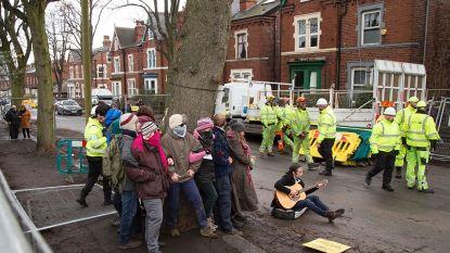 Hoe de kap van 17.500 bomen een Noord-Engels stadje op zijn kop zet