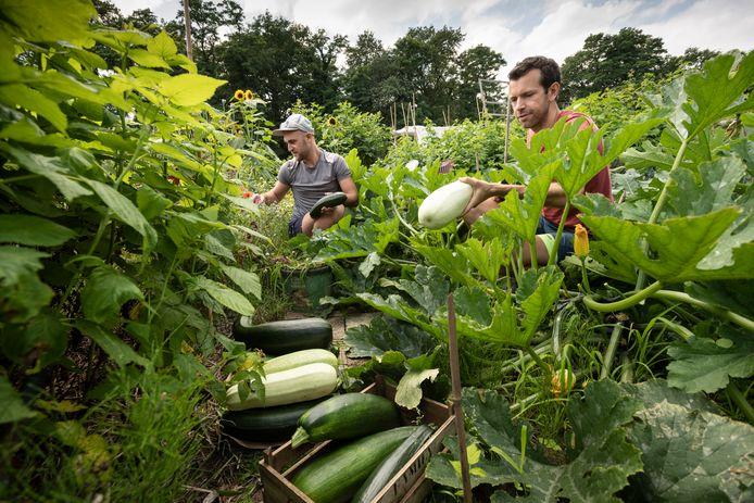 Erik Horstman (rechts)  en Hunter Calder  hebben een prachtige oogst van allerlei groenten in hun moestuin.