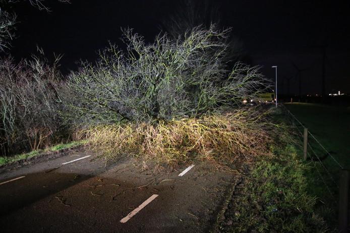 Op de Sint Antoinedijk in Oud Gastel is woensdagochtend vroeg een boom omgewaaid.