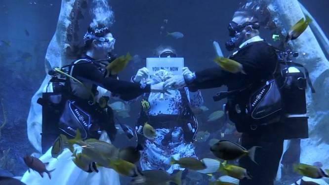 Un couple amateur de plongée se marie sous l'eau