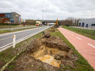 Vijftigtal boompjes aan Tongersestraat moeten opnieuw aangeplant worden