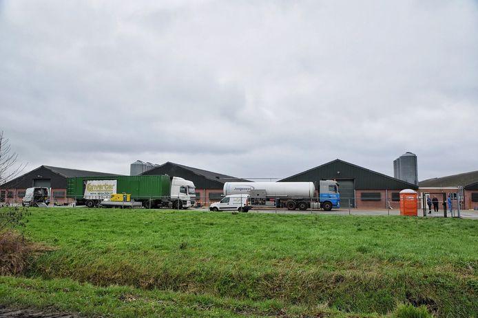 De pluimveehouderij in Moergestel wordt geruimd.