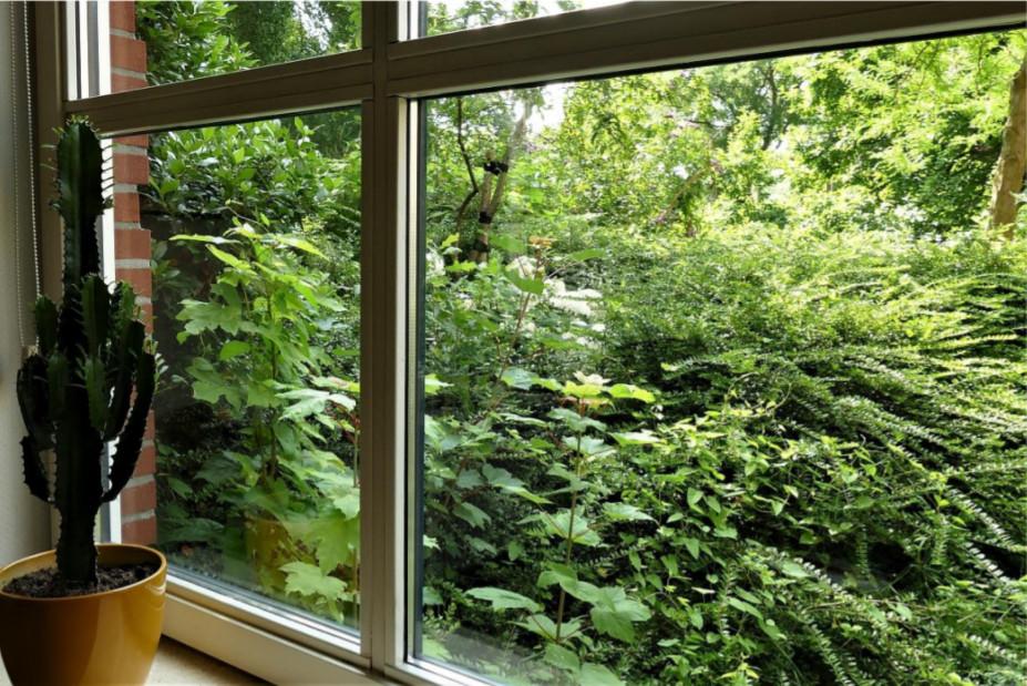 Opgeschoten boompjes voor een van de ramen van Jacques van der Weiden.
