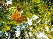 Sliedrecht krijgt een tiny forest