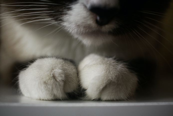 Illustratiebeeld kat.