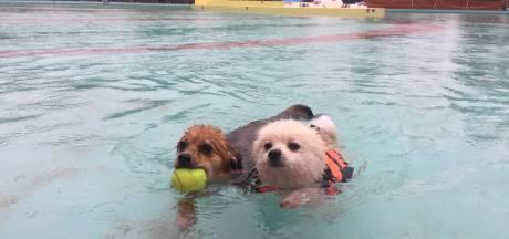 Doggyswim en Dog Village in Oisterwijk met toepasselijk hondenweer