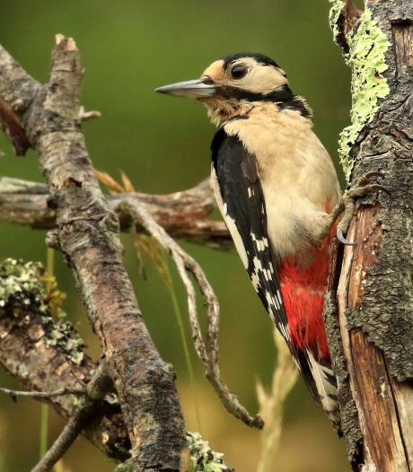 De Elzen is een bosparel tussen de polders én wordt steeds populairder onder vogels