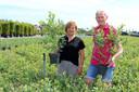 Elma en Ruud Streng huren elk jaar bijenvolken in op hun blauwe bessen-kwekerij.