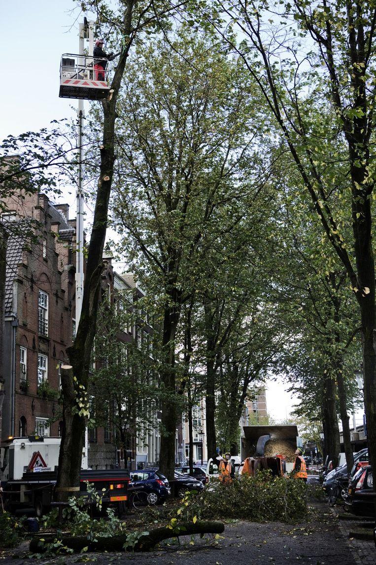 Omgewaaide bomen worden opgehaald en versnipperd. Beeld Femke Boermans