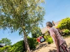 Boom leidt tot schade, eigenaar mag niet kappen van de gemeente Haaksbergen