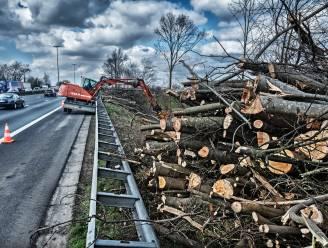 """AWV kapt groen langs E19: """"Het snoeien kan drastisch lijken"""""""