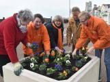 SGP Vlissingen opent campagne met 'cultuurviooltjes'