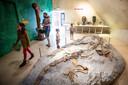 Fossielen in rots en botten zo groot als mensen.