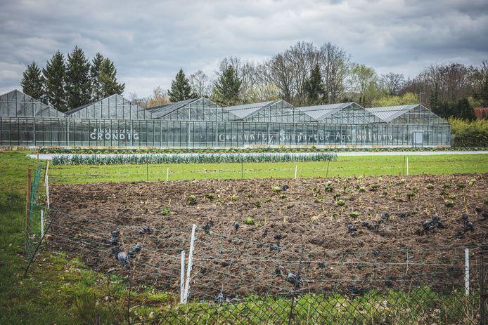Plukboerderij Grondig in Heusden.