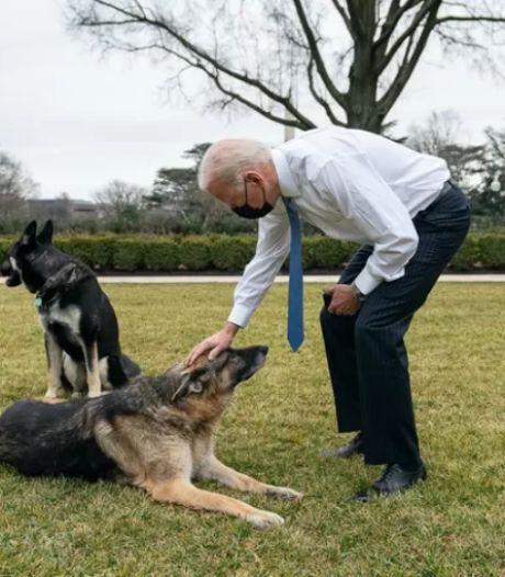 """Les chiens de Biden renvoyés de la Maison Blanche après un """"incident de morsure"""""""
