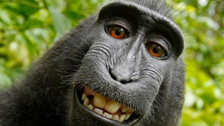 Een van de foto's die de aap met het toestel van Slater maakte. Beeld David J. Slater