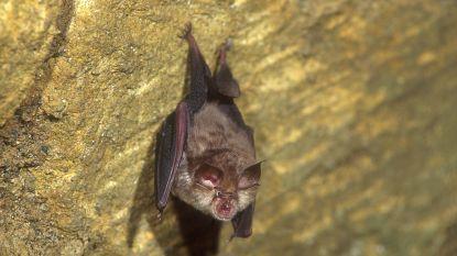 Vleermuizen spotten op Nacht van de Mandelhoek