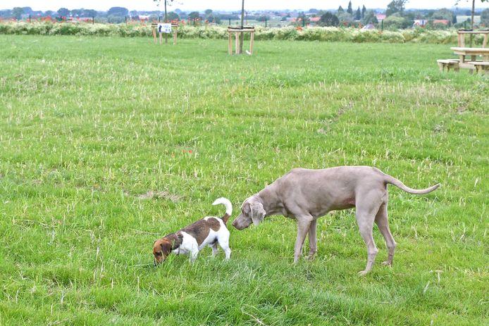 Hondenloopweide Hooglede.