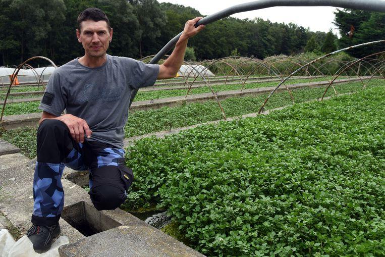 Walter Bouillart kweekt waterkers uit de IJsevallei.