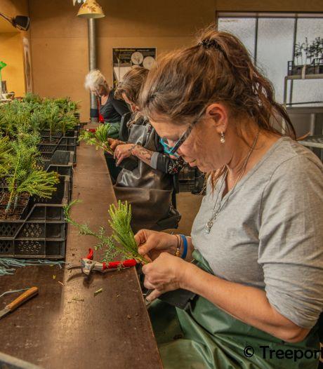 Treeport Zundert helpt boomkwekers aan enters