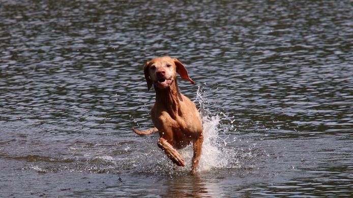 Donna, de hond van Noud van der Weerden, overleed in maart vorig jaar na het eten van een vergiftigd worstje nabij het Keelven in Someren.