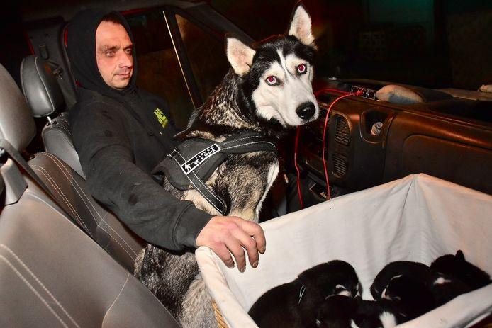 Gregory Demeestere (42), die samen met zijn halfbroer en diens vrouw in het huis op de Drieshoek in Bavikhove woont, ontfermde zich over husky Luna en haar zeven pups, in zijn bestelwagen.