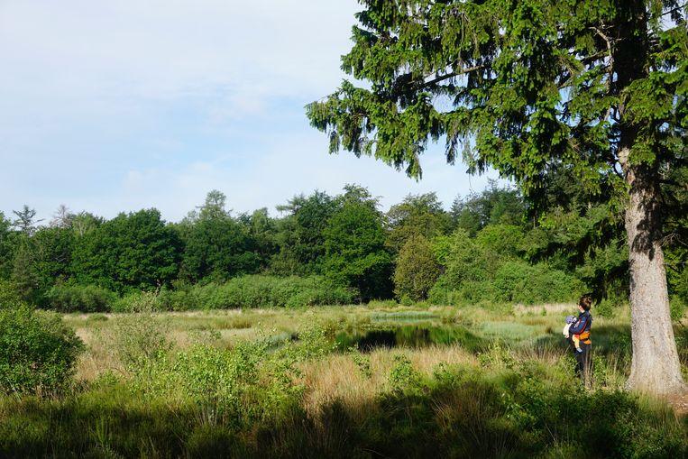 Natuurgebied Het hart van Drenthe, goed voor 5.000 hectare aan bos, hei, vennen en stuifzand en plek genoeg om te verdwalen. Beeld Matthijs Meeuwsen