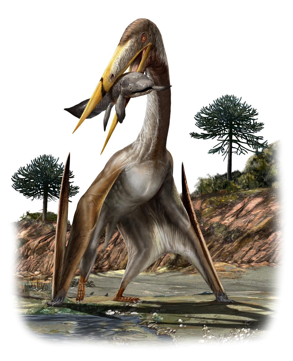 De pteroaurus, een vliegend reptiel, had een spanwijdte van 12 meter en een nek die een giraffe jaloers zou maken.