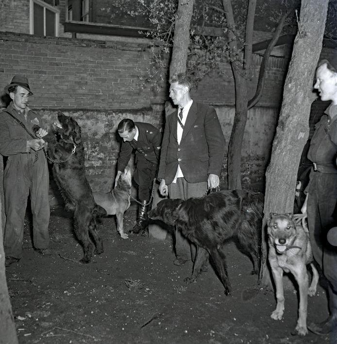 Trekhondenkeuring in april 1949 in Eindhoven