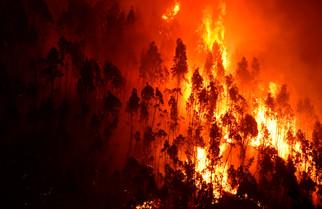 fotoreeks over Hevige bosbranden houden Portugal in bedwang