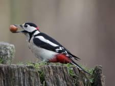 IJshaar en ijsvogels: de winterse dieren laten zich zien in Twente en de Achterhoek