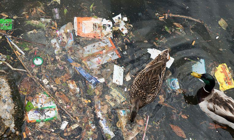 Deze Rotterdammer inspireert mensen wereldwijd afval te rapen