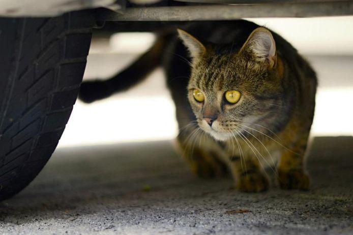 Een kat onder de auto? Dan kun je op dit eiland maar beter even stoppen.