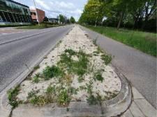 Kamper proef wijst uit: op betonzand groeit niks
