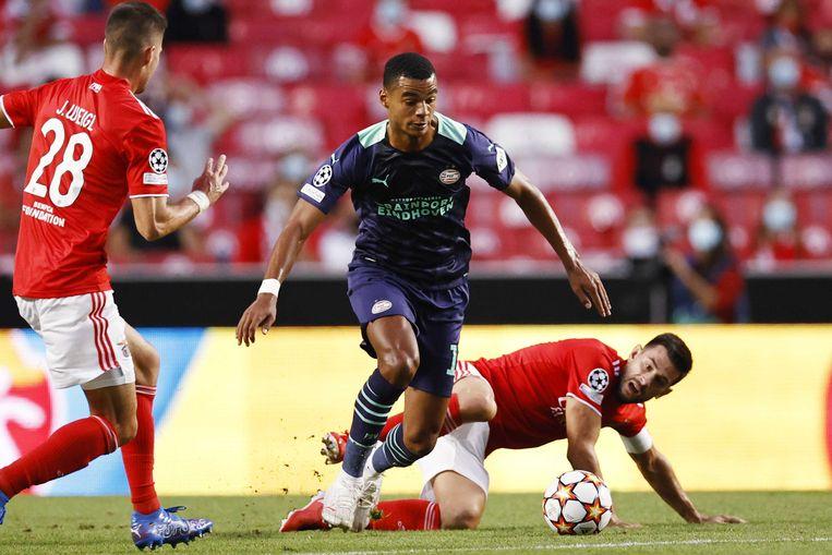 PSV'er Cody Gakpo (m) was geregeld ongrijpbaar voor de defensie van Benfica tijdens het Champions League play-offduel. Beeld ANP