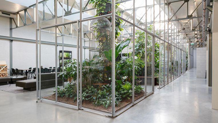 Joolz HQ in Amsterdam-Noord. Beeld Jordi Huisman/BNA