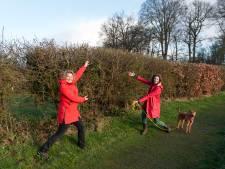 Al meer dan 10 kilometer heg 'uit Olst' maakt de weilanden weer aantrekkelijk voor dier en plant
