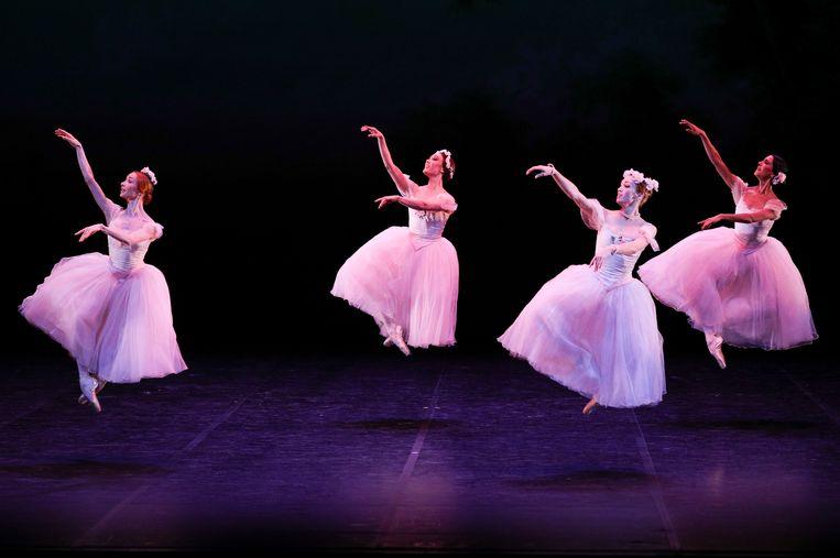 Witte danseressen van het Berlijnse Staatsballet tijdens een repetitie van een voorstelling afgelopen zomer.  Beeld Getty Images