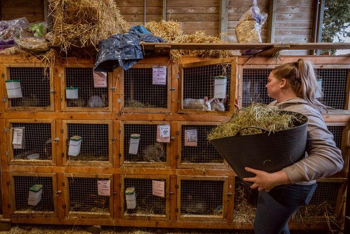 Stagiaire Lena Corba verzorgt de konijnen bij dierenopvang Flappus in Zwolle.