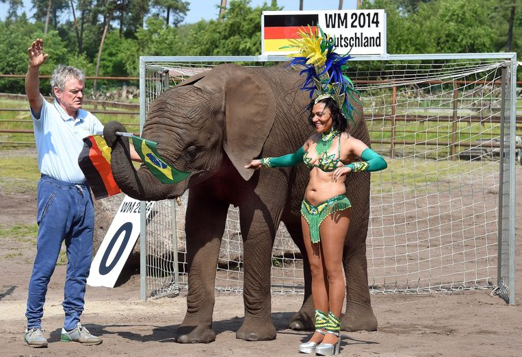 De Duitse olifant Nelly voorspelde dat Duitsland het WK dit jaar zal winnen. Als we Nelly moeten geloven speelt Duitsland in de finale tegen Portugal. Beeld EPA