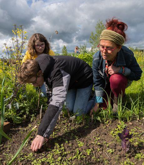 Speuren in een Olster moestuin: Willy Boogaard laat zien hoe eetbaar Sallandse planten eigenlijk zijn