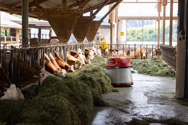 Ook op een bioboerderij als Daxerhof wordt een deel van het werk blijkbaar uitbesteed aan een voederrobot. Maar ach, als het hooi maar lekker en gezond is! Beeld Julius Schrank
