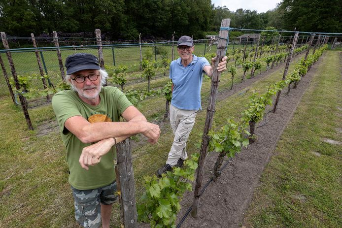 Wijnmakers Frits van Sambeeck (l)  en Lex van Sambeeck in hun wijngaard de Catharinahoeve in Eersel.