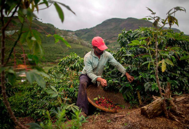 Een koffieboer in Brazilië. Beeld AFP