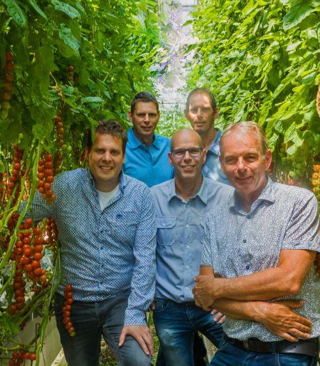 25 voetbalvelden met 100.000 tomaten, vernieuwer Duijvestijn breidt uit: 'Innovatief én bezig met waterbeheer'