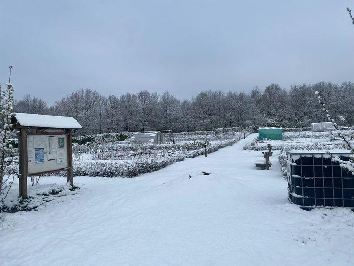 Winterbeelden in Aarschot